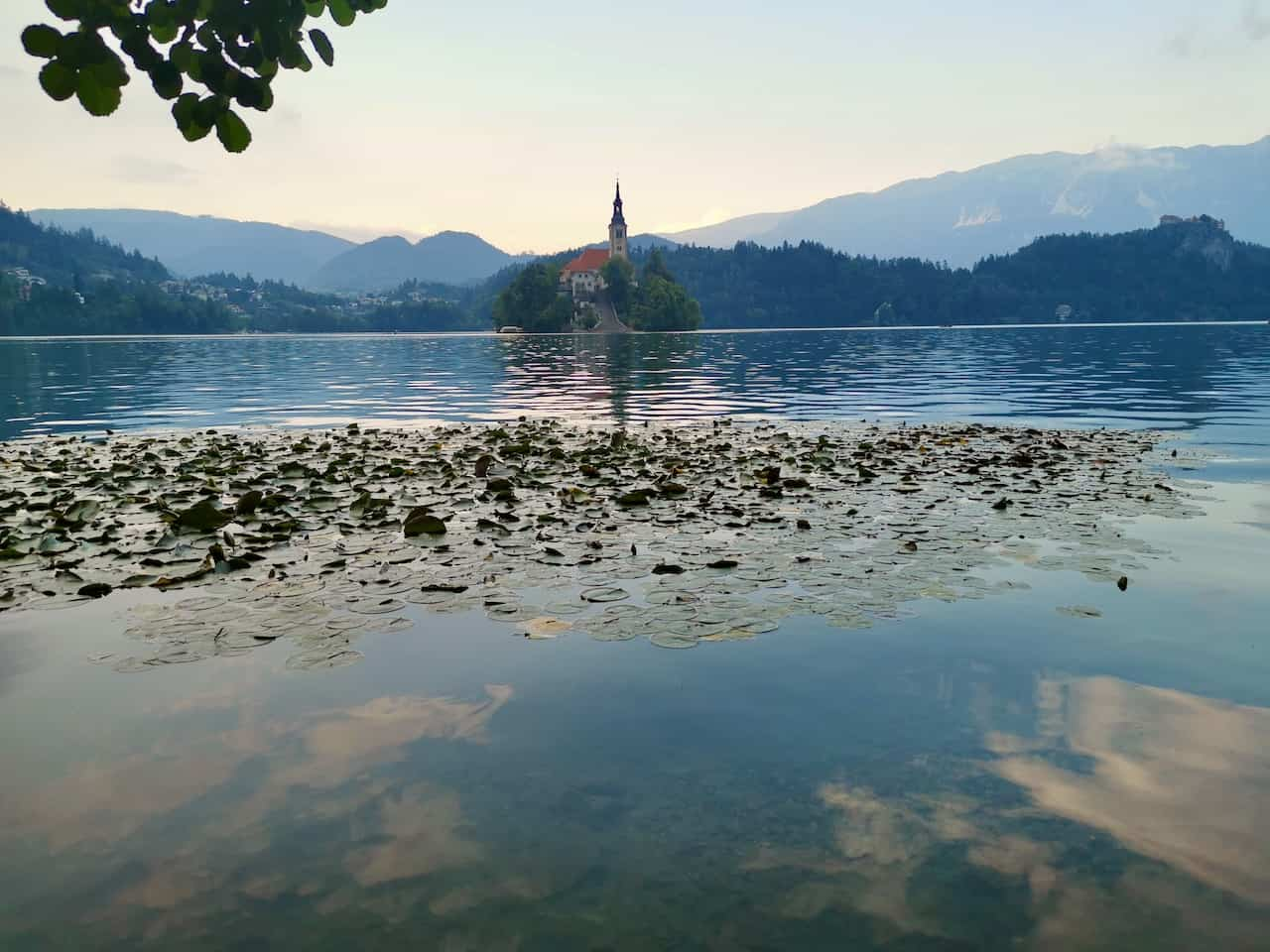 Views of the church island in Bled with water lilies
