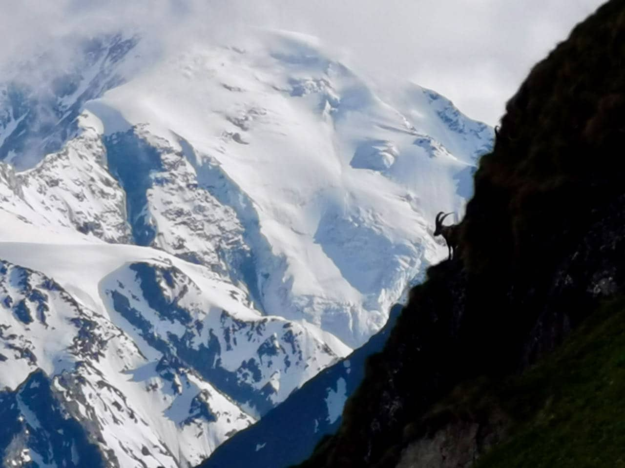 Contrast view of an ibex from Lac de Louvie